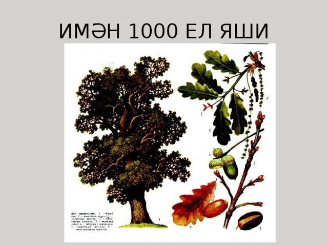 ИМӘН 1000 ЕЛ ЯШИ