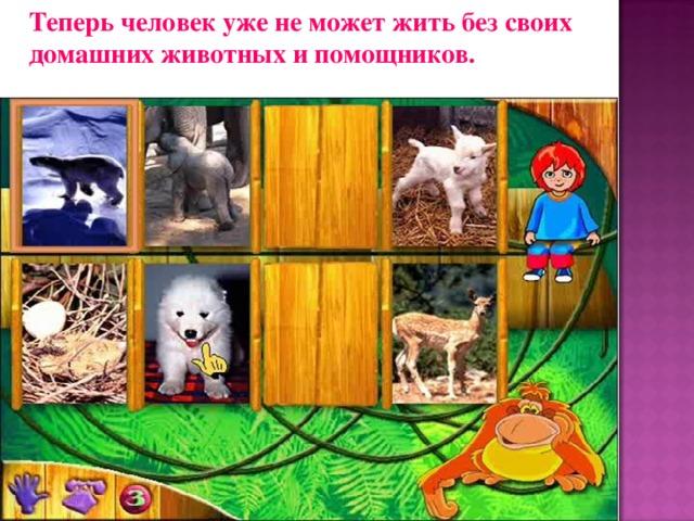 Теперь человек уже не может жить без своих домашних животных и помощников.