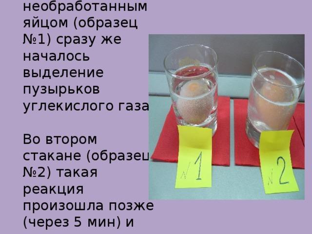 В стакане с необработанным яйцом (образец №1) сразу же началось выделение пузырьков углекислого газа.  Во втором стакане (образец №2) такая реакция произошла позже (через 5 мин) и протекала медленнее.