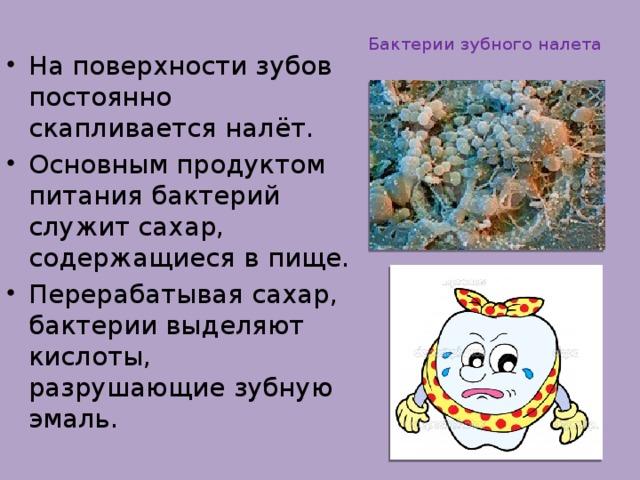 Бактерии зубного налета
