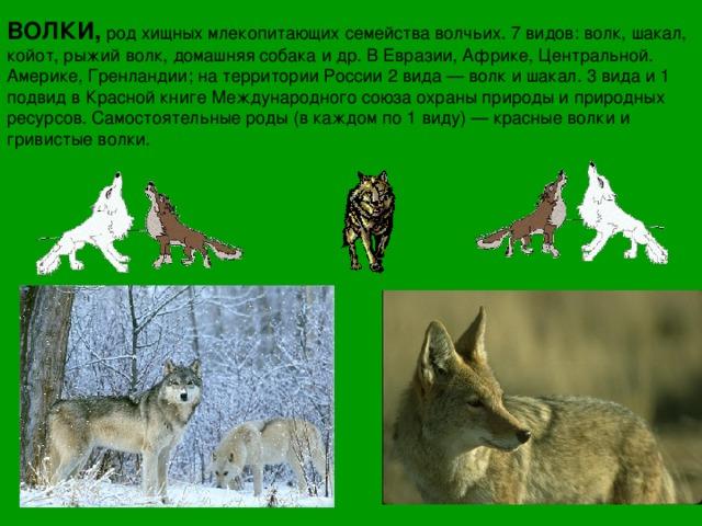 виды волков список и фото мифам народа, никакая
