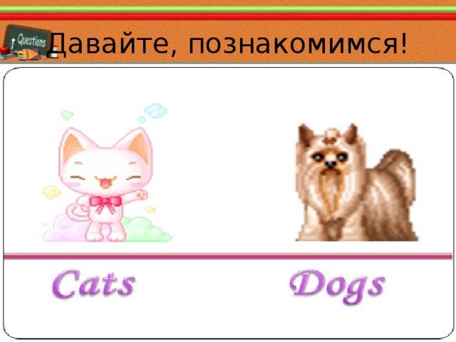 Давайте, познакомимся! Kitty Funny Fox 02.11.16