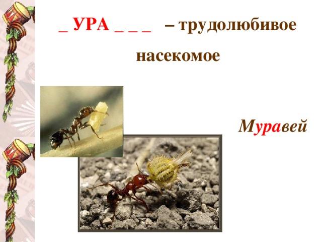 _ УРА _ _ _  – трудолюбивое насекомое   М ура вей