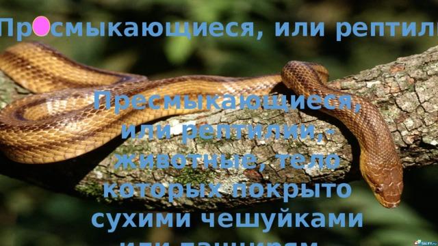 Пресмыкающиеся, или рептилии  Пресмыкающиеся, или рептилии,- животные, тело которых покрыто сухими чешуйками или панцирям.
