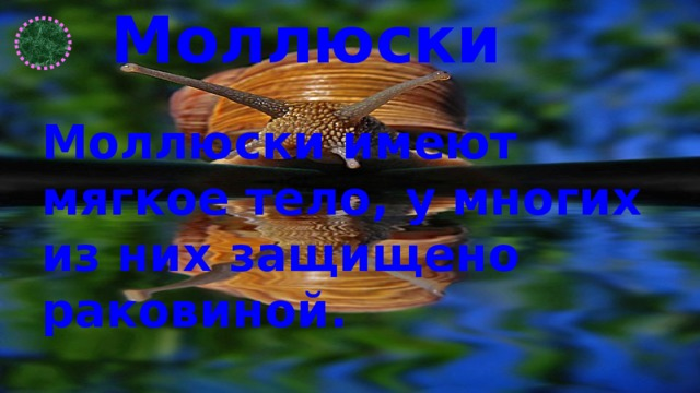 Моллюски Моллюски имеют мягкое тело, у многих из них защищено раковиной.