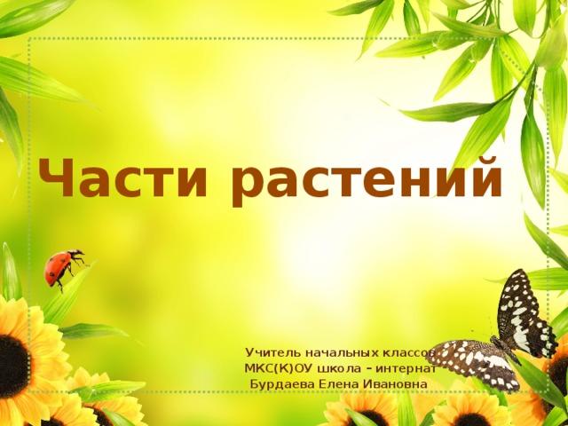 Части растений Учитель начальных классов МКС(К)ОУ школа – интернат Бурдаева Елена Ивановна