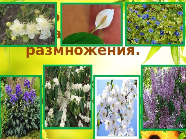 Цветок орган размножения.  Благодаря цветку образуются плод и семя.