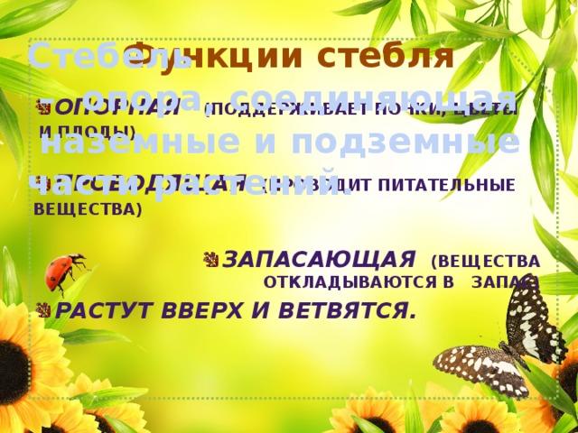 Функции стебля Стебель – опора, соединяющая  наземные и подземные части растений. Опорная   (поддерживает почки, цветы  и плоды)  Проводящая  (проводит питательные вещества)