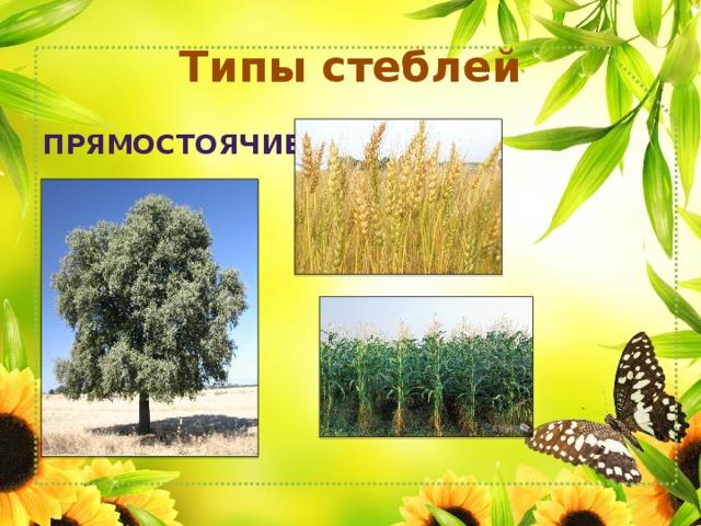 Типы стеблей Прямостоячие
