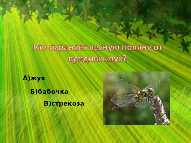 А)жук Б)бабочка В)стрекоза