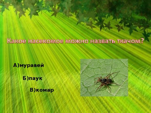 А)муравей Б)паук В)комар