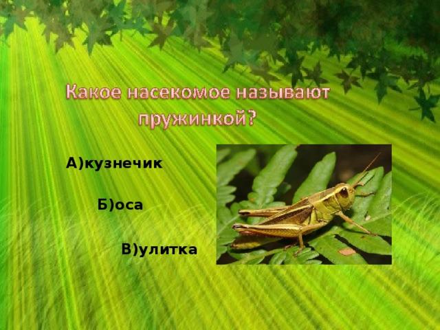 А)кузнечик Б)оса В)улитка