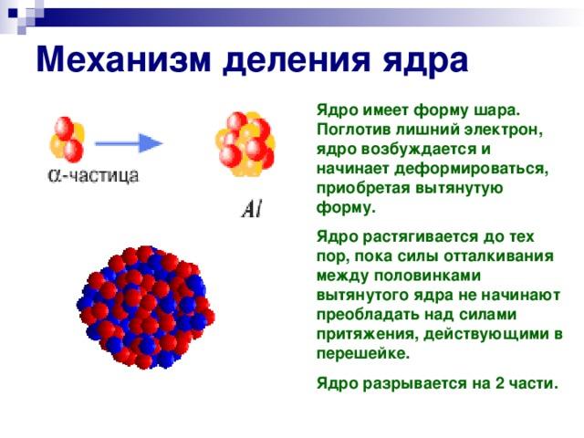 Механизм деления ядра Ядро имеет форму шара. Поглотив лишний электрон, ядро возбуждается и начинает деформироваться, приобретая вытянутую форму. Ядро растягивается до тех пор, пока силы отталкивания между половинками вытянутого ядра не начинают преобладать над силами притяжения, действующими в перешейке. Ядро разрывается на 2 части.