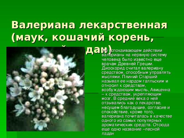 Валериана лекарственная  (маук, кошачий корень, земляной ладан)