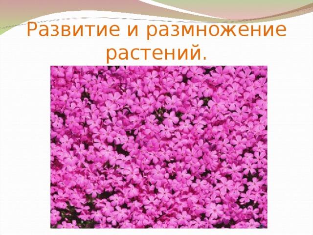 Развитие и размножение растений.