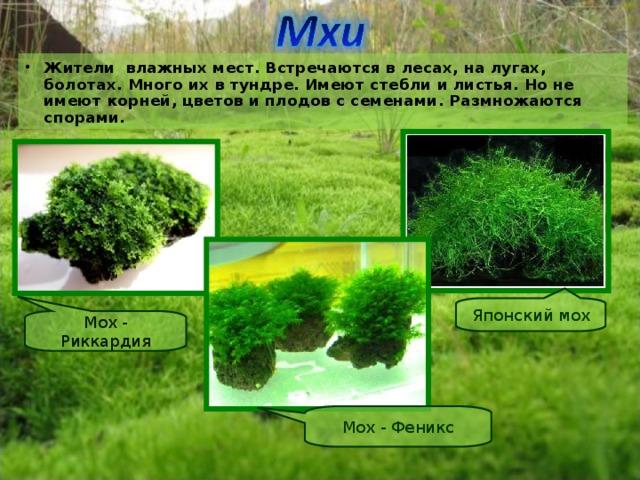 Жители влажных мест. Встречаются в лесах, на лугах, болотах. Много их в тундре. Имеют стебли и листья. Но не имеют корней, цветов и плодов с семенами. Размножаются спорами.