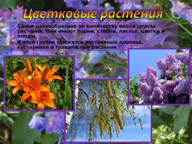 Самая разнообразная по количеству видов группа растений. Они имеют корни, стебли, листья, цветки и плоды. К этой группе относятся лиственные деревья, кустарники и травянистые растения.