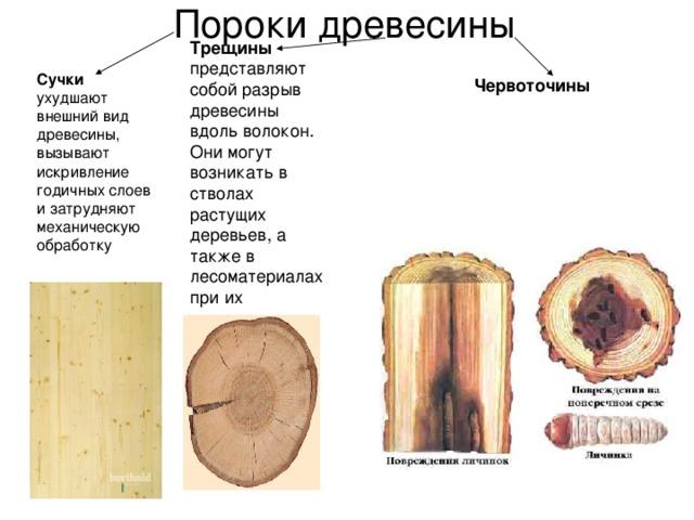 Пороки древесины Трещины представляют собой разрыв древесины вдоль волокон. Они могут возникать в стволах растущих деревьев, а также в лесоматериалах при их высыхании Сучки ухудшают внешний вид древесины, вызывают искривление годичных слоев и затрудняют механическую обработку Червоточины