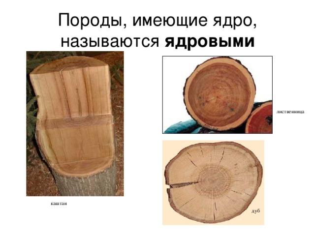 Породы, имеющие ядро, называются ядровыми лиственница каштан дуб