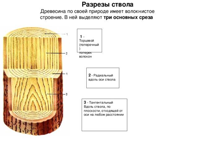 Разрезы ствола Древесина по своей природе имеет волокнистое строение. В ней выделяют три основных среза   1 - Торцевой (поперечный) поперек волокон 2 - Радиальный вдоль оси ствола 3 - Тангентальный Вдоль ствола, по плоскости, отходящей от оси на любом расстоянии