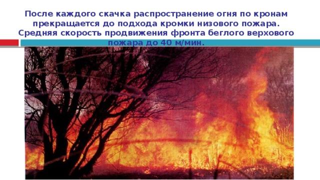 После каждого скачка распространение огня по кронам прекращается до подхода кромки низового пожара. Средняя скорость продвижения фронта беглого верхового пожара до 40 м/мин.