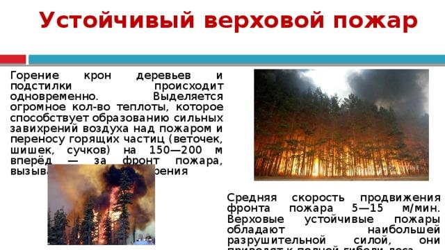 Устойчивый верховой пожар Горение крон деревьев и подстилки происходит одновременно. Выделяется огромное кол-во теплоты, которое способствует образованию сильных завихрений воздуха над пожаром и переносу горящих частиц (веточек, шишек, сучков) на 150—200 м вперёд — за фронт пожара, вызывая новые очаги горения Средняя скорость продвижения фронта пожара 5—15 м/мин. Верховые устойчивые пожары обладают наибольшей разрушительной силой, они приводят к полной гибели леса