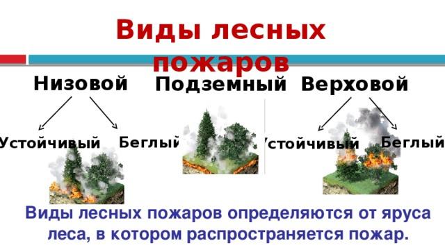 Виды лесных пожаров Низовой Верховой Подземный Беглый Беглый Устойчивый Устойчивый Виды лесных пожаров определяются от яруса леса, в котором распространяется пожар. 6