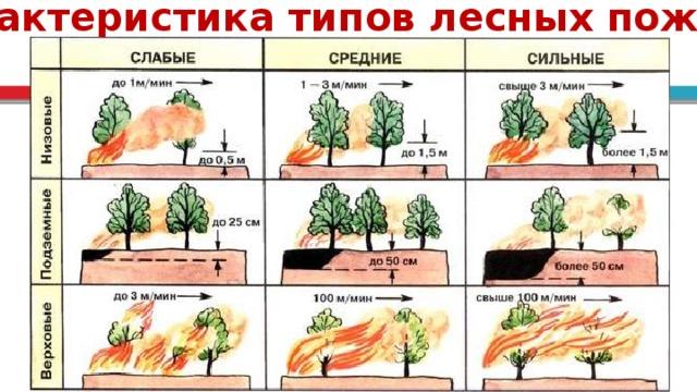 Характеристика типов лесных пожаров 6