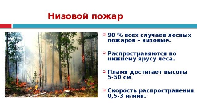 Низовой пожар 90 % всех случаев лесных пожаров – низовые.  Распространяются по нижнему ярусу леса.  Пламя достигает высоты 5-50 см . Скорость распространения 0,5-3 м/мин. 6