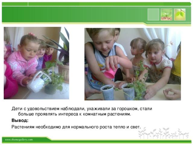 Дети с удовольствием наблюдали, ухаживали за горошком, стали больше проявлять интереса к комнатным растениям. Вывод: Растениям необходимо для нормального роста тепло и свет.