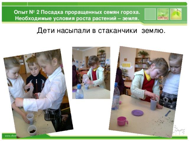 Опыт № 2 Посадка проращенных семян гороха. Необходимые условия роста растений – земля. Дети насыпали в стаканчики землю.