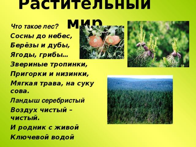 Растительный мир Что такое лес? С осны до небес, Берёзы и дубы, Ягоды, грибы… З вериные тропинки, Пригорки и низинки, Мягкая трава, на суку сова. Ландыш серебристый Воздух чистый – чистый .  И родник с живой Ключевой водой