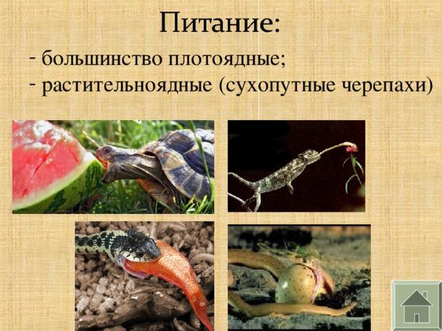 большинство плотоядные;  растительноядные (сухопутные черепахи)