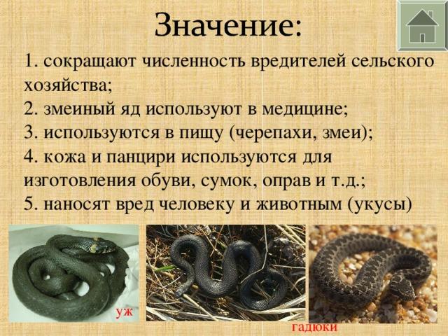 1. сокращают численность вредителей сельского хозяйства; 2. змеиный яд используют в медицине; 3. используются в пищу (черепахи, змеи); 4. кожа и панцири используются для изготовления обуви, сумок, оправ и т.д.; 5. наносят вред человеку и животным (укусы) уж гадюки