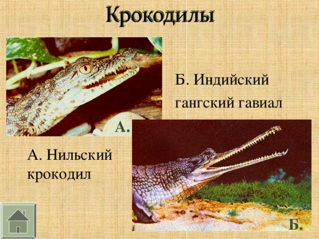 Б. Индийский гангский гавиал А. А. Нильский крокодил Б.