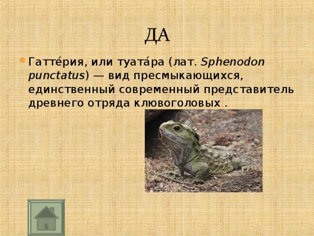 Гатте́рия, или туата́ра (лат. Sphenodon punctatus )— вид пресмыкающихся, единственный современный представитель древнего отряда клювоголовых .