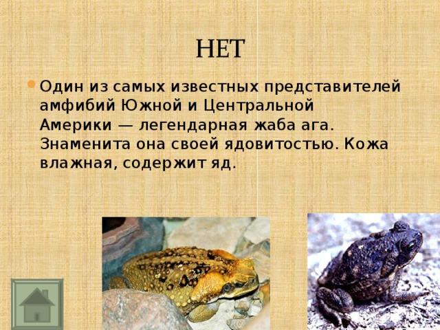 Один из самых известных представителей амфибий Южной иЦентральной Америки— легендарная жаба ага. Знаменита она своей ядовитостью. Кожа влажная, содержит яд.