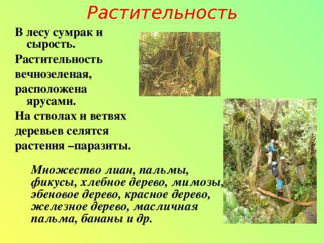 Растительность В лесу сумрак и сырость. Растительность вечнозеленая, расположена ярусами. На стволах и ветвях деревьев селятся растения –паразиты. Множество лиан, пальмы, фикусы, хлебное дерево, мимозы, эбеновое дерево, красное дерево, железное дерево, масличная пальма, бананы и др.
