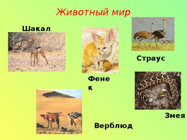 Животный мир   Шакал Страус Фенек Змея Верблюд