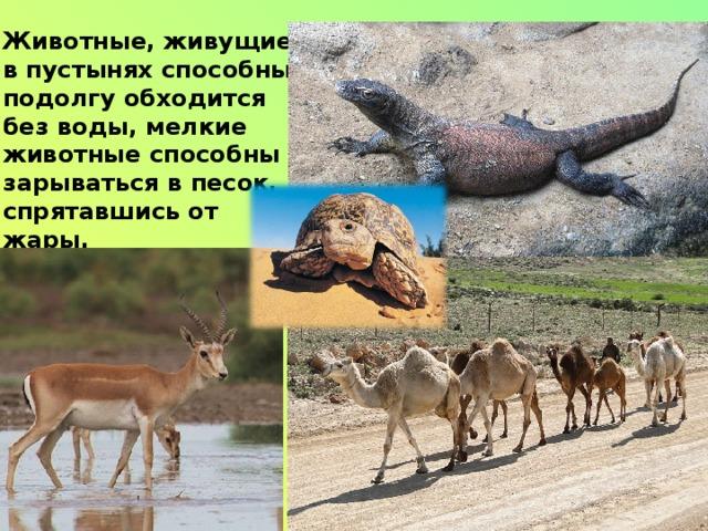 Животные, живущие в пустынях способны подолгу обходится без воды, мелкие животные способны зарываться в песок, спрятавшись от жары.