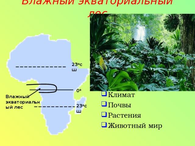 Влажный экваториальный лес   Климат Почвы Растения Животный мир 23 0 сш 0 0 Влажный экваториальный лес 23 0 сш