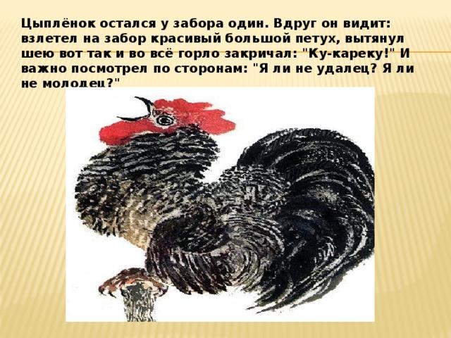 Цыплёнок остался у забора один. Вдруг он видит: взлетел на забор красивый большой петух, вытянул шею вот так и во всё горло закричал: