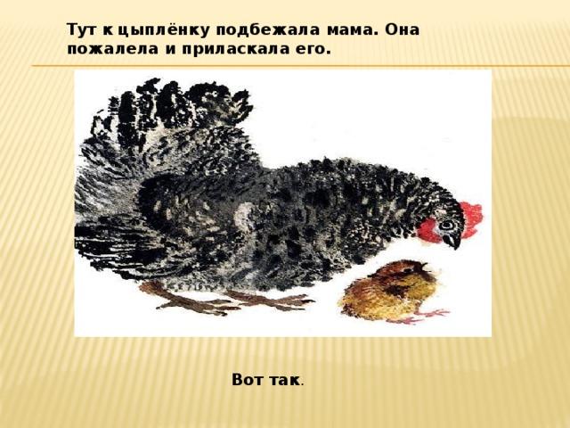 Тут к цыплёнку подбежала мама. Она пожалела и приласкала его. Вот так .