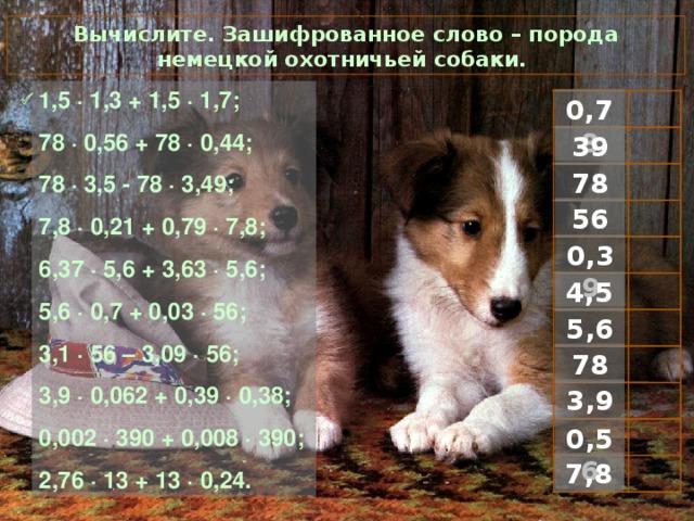 Вычислите. Зашифрованное слово – порода немецкой охотничьей собаки. 1 ,5 · 1,3 + 1,5 · 1,7; 78 · 0,56 + 78 · 0,44; 78 · 3,5 - 78 · 3,49; 7,8 · 0,21 + 0,79 · 7,8; 6,37 · 5,6 + 3,63 · 5,6; 5,6 · 0,7 + 0,03 · 56; 3,1 · 56 – 3,09 · 56; 3,9 · 0,062 + 0,39 · 0,38; 0,002 · 390 + 0,008 · 390; 2,76 · 13 + 13 · 0,24.  0,78 39 78 56 0,39 4,5 5,6 78 3,9 0,56 7,8