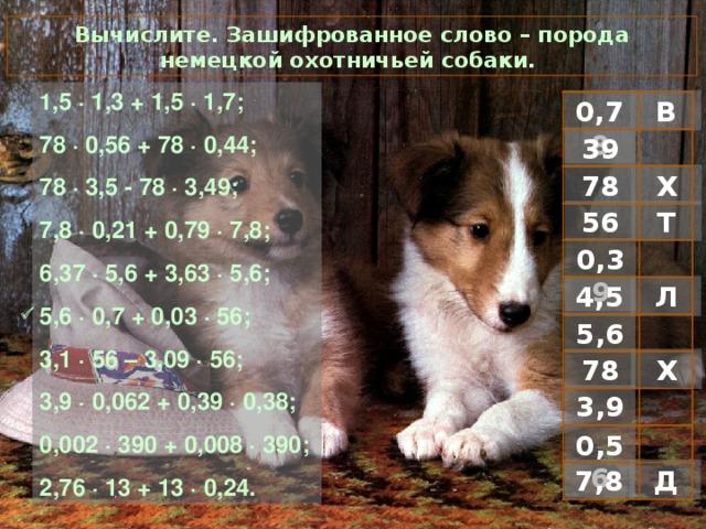 Вычислите. Зашифрованное слово – порода немецкой охотничьей собаки. 1 ,5 · 1,3 + 1,5 · 1,7; 78 · 0,56 + 78 · 0,44; 78 · 3,5 - 78 · 3,49; 7,8 · 0,21 + 0,79 · 7,8; 6,37 · 5,6 + 3,63 · 5,6; 5,6 · 0,7 + 0,03 · 56; 3,1 · 56 – 3,09 · 56; 3,9 · 0,062 + 0,39 · 0,38; 0,002 · 390 + 0,008 · 390; 2,76 · 13 + 13 · 0,24. В 0,78 39 Х 78 Т 56 0,39 Л 4,5  5,6 Х 78 3,9 0,56 Д 7,8