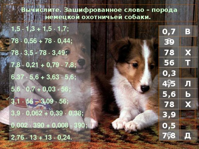 Вычислите. Зашифрованное слово – порода немецкой охотничьей собаки. 1 ,5 · 1,3 + 1,5 · 1,7; 78 · 0,56 + 78 · 0,44; 78 · 3,5 - 78 · 3,49; 7,8 · 0,21 + 0,79 · 7,8; 6,37 · 5,6 + 3,63 · 5,6; 5,6 · 0,7 + 0,03 · 56; 3,1 · 56 – 3,09 · 56; 3,9 · 0,062 + 0,39 · 0,38; 0,002 · 390 + 0,008 · 390; 2,76 · 13 + 13 · 0,24. В 0,78 39 Х 78 Т 56 0,39 Л 4,5 Ь 5,6  Х 78 3,9 0,56 Д 7,8