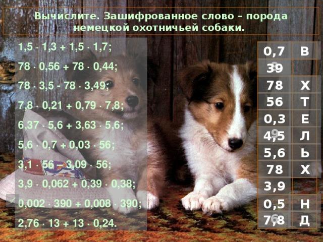Вычислите. Зашифрованное слово – порода немецкой охотничьей собаки. 1 ,5 · 1,3 + 1,5 · 1,7; 78 · 0,56 + 78 · 0,44; 78 · 3,5 - 78 · 3,49; 7,8 · 0,21 + 0,79 · 7,8; 6,37 · 5,6 + 3,63 · 5,6; 5,6 · 0,7 + 0,03 · 56; 3,1 · 56 – 3,09 · 56; 3,9 · 0,062 + 0,39 · 0,38; 0,002 · 390 + 0,008 · 390; 2,76 · 13 + 13 · 0,24. В 0,78 39 Х 78 Т 56 0,39 Е Л 4,5 Ь 5,6 Х 78 3,9 Н  0,56 Д 7,8