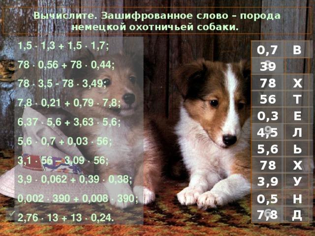 Вычислите. Зашифрованное слово – порода немецкой охотничьей собаки. 1 ,5 · 1,3 + 1,5 · 1,7; 78 · 0,56 + 78 · 0,44; 78 · 3,5 - 78 · 3,49; 7,8 · 0,21 + 0,79 · 7,8; 6,37 · 5,6 + 3,63 · 5,6; 5,6 · 0,7 + 0,03 · 56; 3,1 · 56 – 3,09 · 56; 3,9 · 0,062 + 0,39 · 0,38; 0,002 · 390 + 0,008 · 390; 2,76 · 13 + 13 · 0,24. В 0,78 39 Х 78 Т 56 0,39 Е Л 4,5 Ь 5,6 Х 78 У 3,9 Н 0,56 Д 7,8 