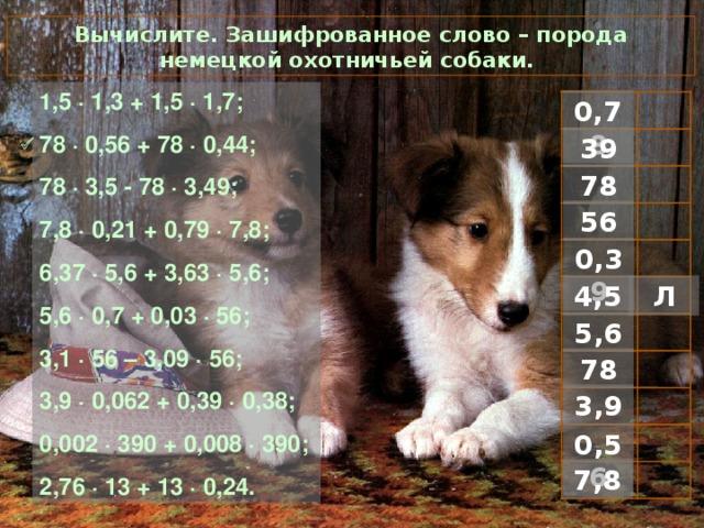 Вычислите. Зашифрованное слово – порода немецкой охотничьей собаки. 1 ,5 · 1,3 + 1,5 · 1,7; 78 · 0,56 + 78 · 0,44; 78 · 3,5 - 78 · 3,49; 7,8 · 0,21 + 0,79 · 7,8; 6,37 · 5,6 + 3,63 · 5,6; 5,6 · 0,7 + 0,03 · 56; 3,1 · 56 – 3,09 · 56; 3,9 · 0,062 + 0,39 · 0,38; 0,002 · 390 + 0,008 · 390; 2,76 · 13 + 13 · 0,24. 0,78 39  78 56 0,39 Л 4,5 5,6 78 3,9 0,56 7,8