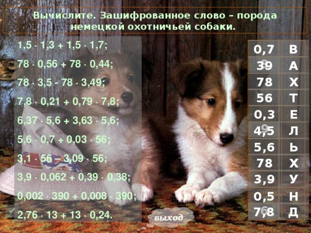 Вычислите. Зашифрованное слово – порода немецкой охотничьей собаки. 1 ,5 · 1,3 + 1,5 · 1,7; 78 · 0,56 + 78 · 0,44; 78 · 3,5 - 78 · 3,49; 7,8 · 0,21 + 0,79 · 7,8; 6,37 · 5,6 + 3,63 · 5,6; 5,6 · 0,7 + 0,03 · 56; 3,1 · 56 – 3,09 · 56; 3,9 · 0,062 + 0,39 · 0,38; 0,002 · 390 + 0,008 · 390; 2,76 · 13 + 13 · 0,24. В 0,78 А 39 Х 78 Т 56 Е 0,39 Л 4,5 Ь 5,6 Х 78 У 3,9 Н 0,56 Д 7,8  выход